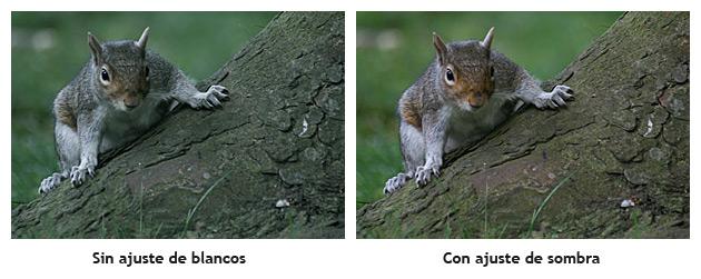Balance de blancos en fotografía, qué es y cómo se usa.